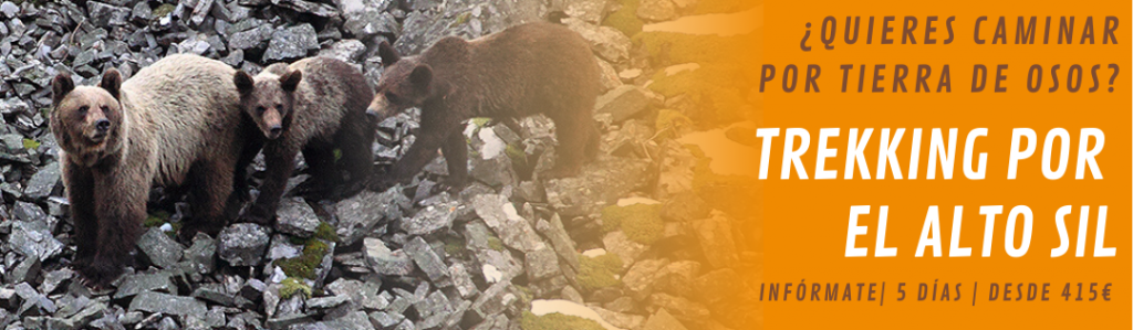 Trekking Alto Sil ver osos