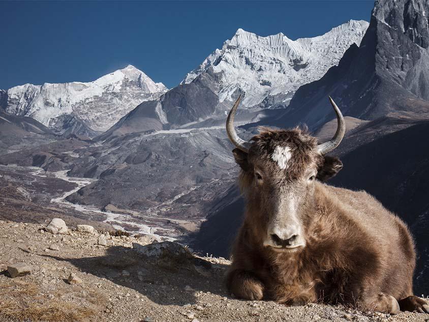 Viaje trekking Himalaya Nepal