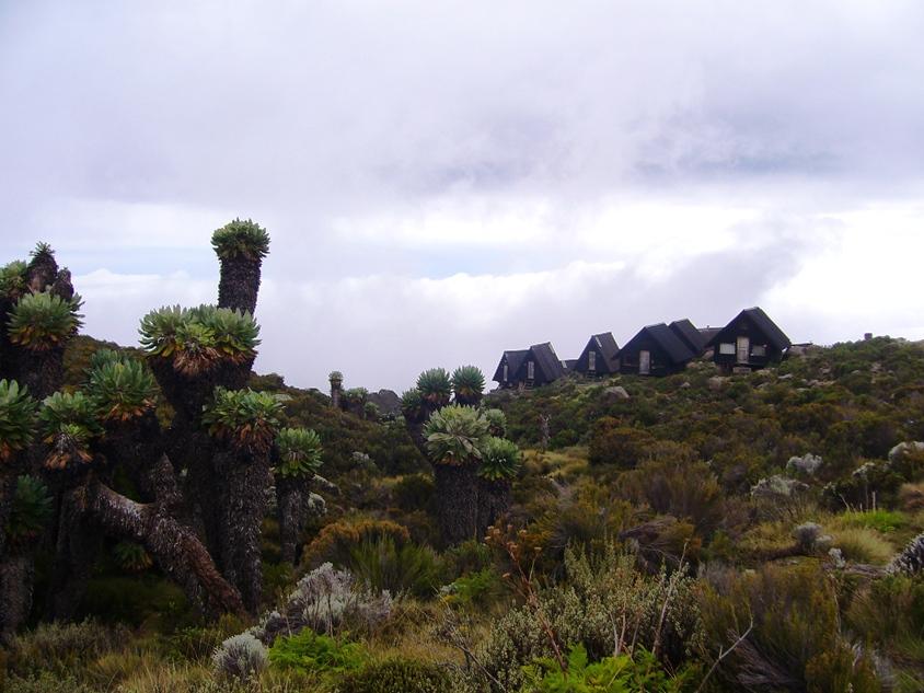 Viaje trekking ruta Marangu