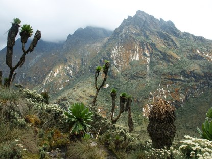 Ascension al Rwenzori Pico Margarita